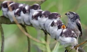 bird longtail finch