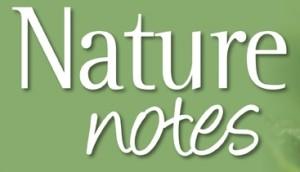 nature notes 2 logo