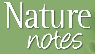 nature notes 2 logo