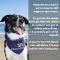 Doggy Message from the RNLI